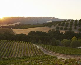 Getaway: Wine Country Extraordinaire