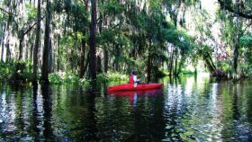 Ritz Carlton Orlando Eco Tour Kayak